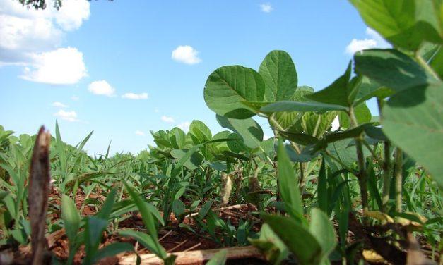 Le soja, produit agricole par excellence