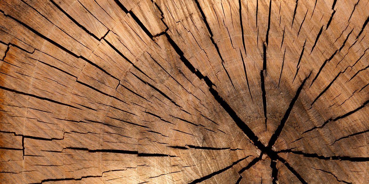 Le cours du bois en bourse