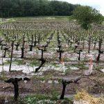 Quel sera l'impact des intempéries du week-end dernier sur les matières premières agricoles?