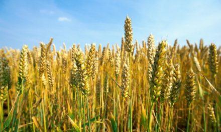 Comment les agriculteurs peuvent-ils protéger leurs exploitations des effets de la sécheresse et limiter l'augmentation des prix des matières premières?