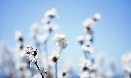 Le prix du coton biologique