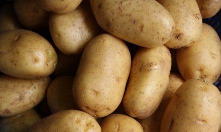 L'évolution du cours des pommes de terre.