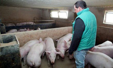 Le prix aujourd'hui du porc