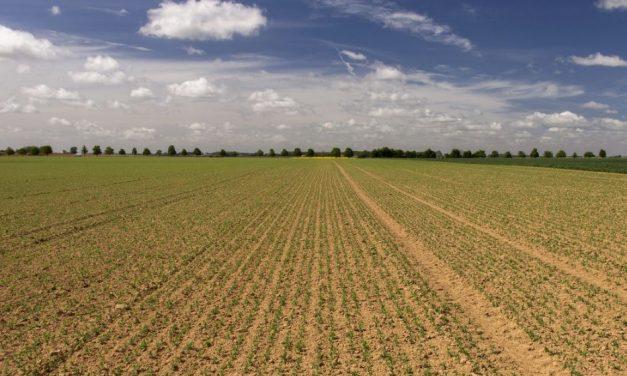 Ouvrir une exploitation agricole : À quoi faut-il penser ?