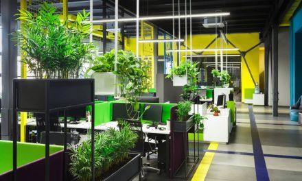 Transition écologique des entreprises: comment végétaliser l'espace de travail?
