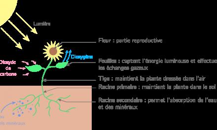 Qu'est-ce que la matière minérale? La matière organique?